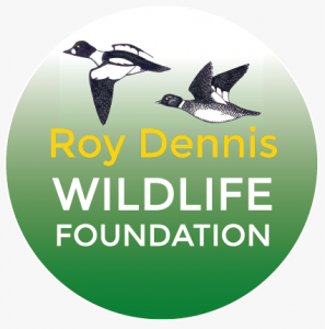 Roy Dennis i Tim Mackrill o naszym Projekcie